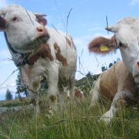 Una giornata da pastore