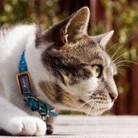 GPS rintraccia animali domestici