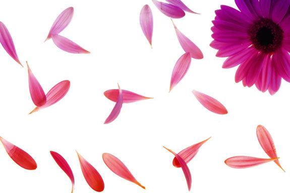 significato dei fiori - linguaggio dei fiori
